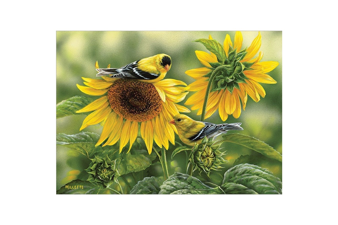 Puzzle Cobble Hill - Sunflowers and Goldfinches, 1.000 piese (Cobble-Hill-80115) imagine