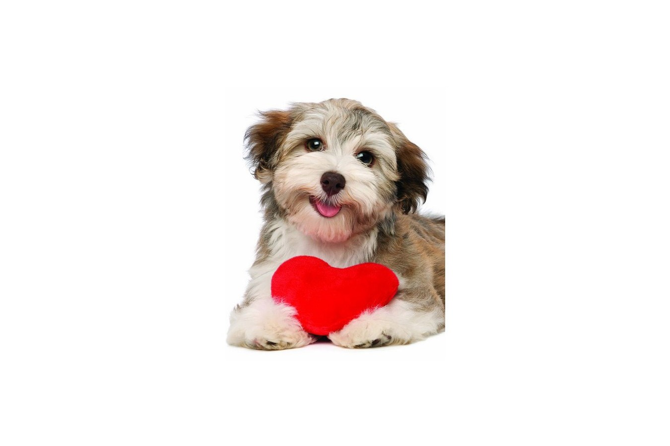 Puzzle Eurographics - Dog With Heart, 100 piese mini (8104-0615) imagine