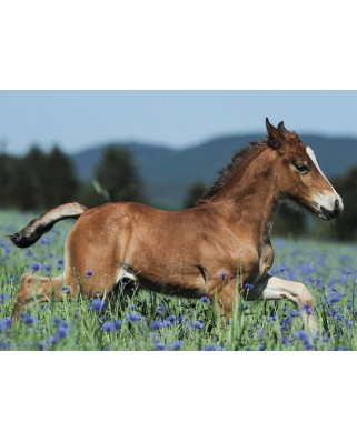 Puzzle Ravensburger - A Foal in the Meadow, 150 piese XXL (10024)
