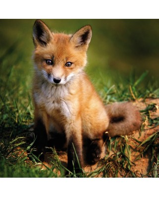 Puzzle Ravensburger - Baby Fox, 500 piese (15237)