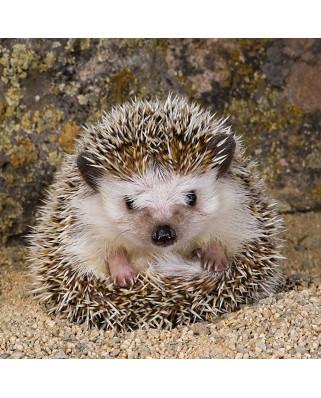 Puzzle Ravensburger - Cute Hedgehog, 500 piese (15224)