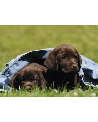 Puzzle Ravensburger - Labrador Puppy, 300 piese XXL (13209)