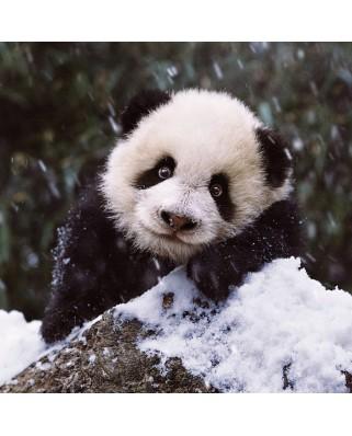 Puzzle Ravensburger - Panda, 500 piese (15236)