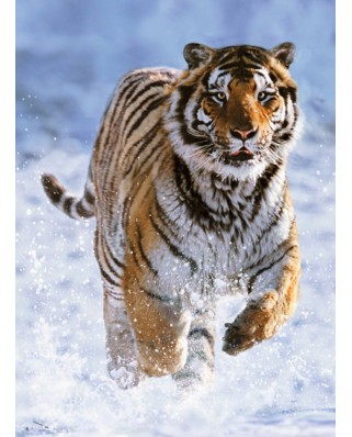 Puzzle Ravensburger - Tiger in the Snow, 500 piese (14475)