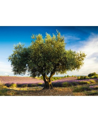 Puzzle Schmidt - Olive Tree In Provence, 1.000 piese (58357)