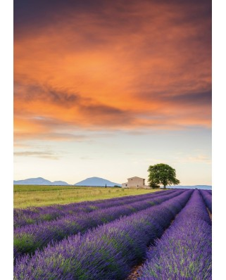 Puzzle Schmidt - Field Of Lavender, Provence, 500 piese (58364)