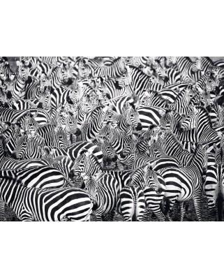 Puzzle Ravensburger - Zebra, 500 piese dificile (14807)