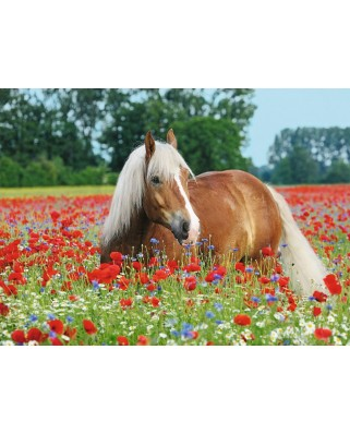 Puzzle Ravensburger - Horse in the Poppy Field, 500 piese (14831)