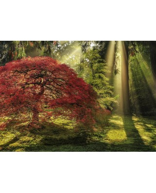 Puzzle Heye - Aaron Reed: Guiding Light, 1.000 piese (29855)
