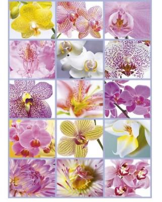 Puzzle Educa - Flower Collage, 1500 piese (16302)