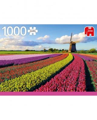 Puzzle Jumbo - Field of Tulips, 1.000 piese (18833)