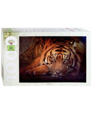 Puzzle Step - Siberian tiger, 1.000 piese (79142)
