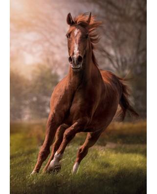 Puzzle Clementoni - Horse, 1500 piese (31811)