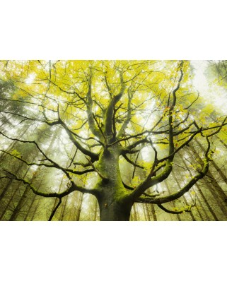 Puzzle Schmidt - Stefan Hefele: Dream Tree, 1.000 piese (59669)