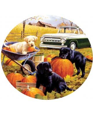Puzzle rotund SunsOut - Pumpkin Patch, 500 piese (Sunsout-73434)