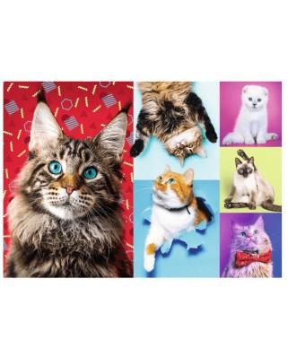 Puzzle Trefl - Happy Cats, 1000 piese (10591)