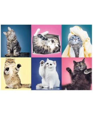Puzzle Trefl - Kittens, 500 piese (37377)