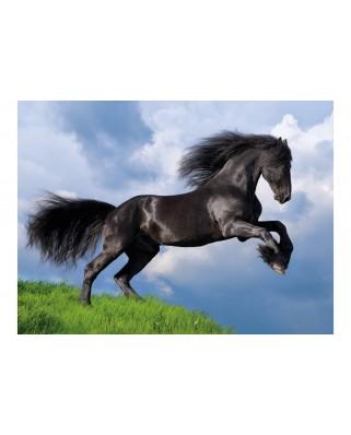 Puzzle Clementoni - Fresian Black Horse, 500 piese (35071)