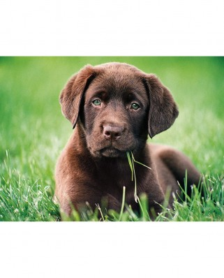 Puzzle Clementoni - Chocolate Puppy, 500 piese (35072)