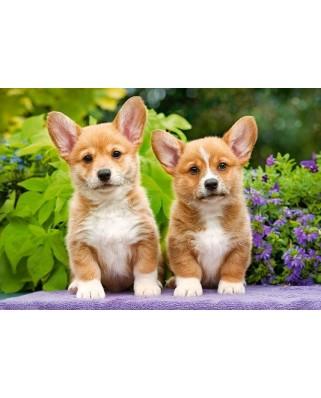 Puzzle Castorland - Welsh Corgi Puppies, 1000 piese (104659)