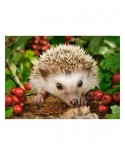 Puzzle Castorland - Hedgehog with Berries, 100 piese (111145)