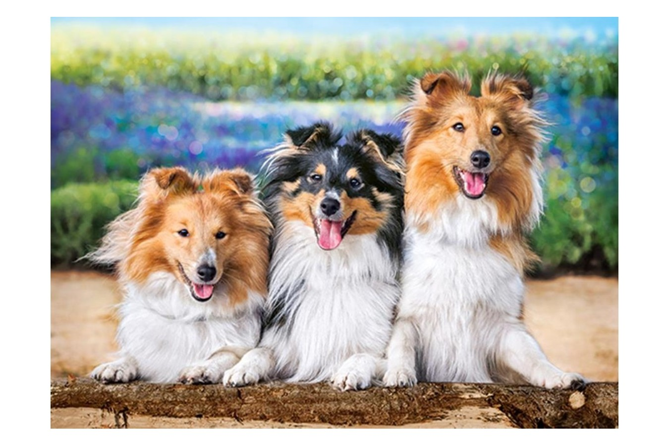 Puzzle Castorland - Shelties in the Lavender Garden, 200 piese (222117)