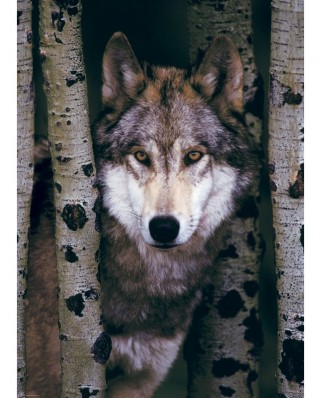 Puzzle Eurographics - Gray Wolf, 1000 piese (6000-1244)