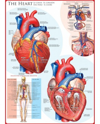 Puzzle Eurographics - The Heart, 1.000 piese (6000-0257)