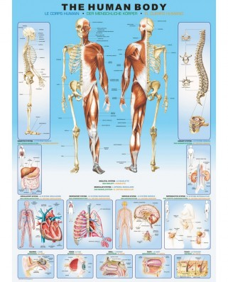 Puzzle Eurographics - Human body, 1000 piese (6000-1000)