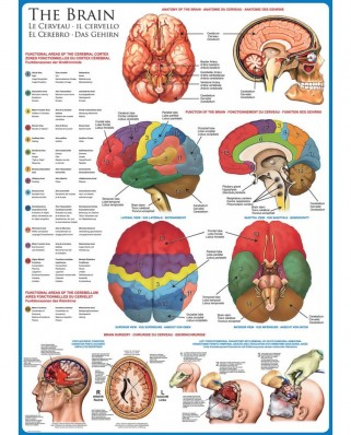 Puzzle Eurographics - The Brain, 1.000 piese (6000-0256)