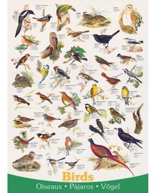 Puzzle Eurographics - Birds, 1.000 piese (6000-1259)