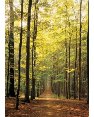 Puzzle Eurographics - Forest Path, 1.000 piese (6000-3846)