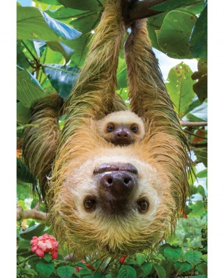 Puzzle Eurographics - Sloths, 250 piese (8251-5556)
