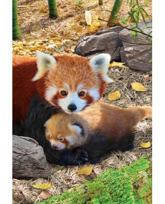 Puzzle Eurographics - Red Pandas, 250 piese (8251-5557)