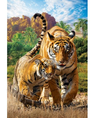 Puzzle Eurographics - Tigers, 250 piese (8251-5559)