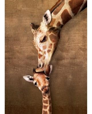 Puzzle 500 piese XXL - Giraffe Mother's Kiss (Eurographics-6500-0301)