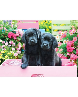 Puzzle 500 piese XXL - Black Labs in Pink Box (Eurographics-6500-5462)