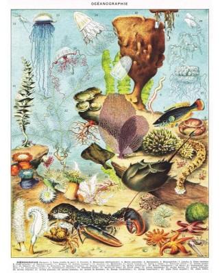 Puzzle 1000 piese - Vintage Images - Oceanographie (New-York-Puzzle-PD1975)