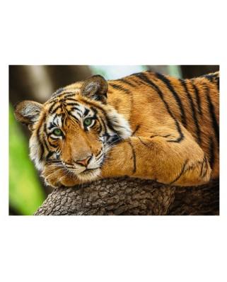 Puzzle 500 piese - Tiger Portrait (Trefl-37397)