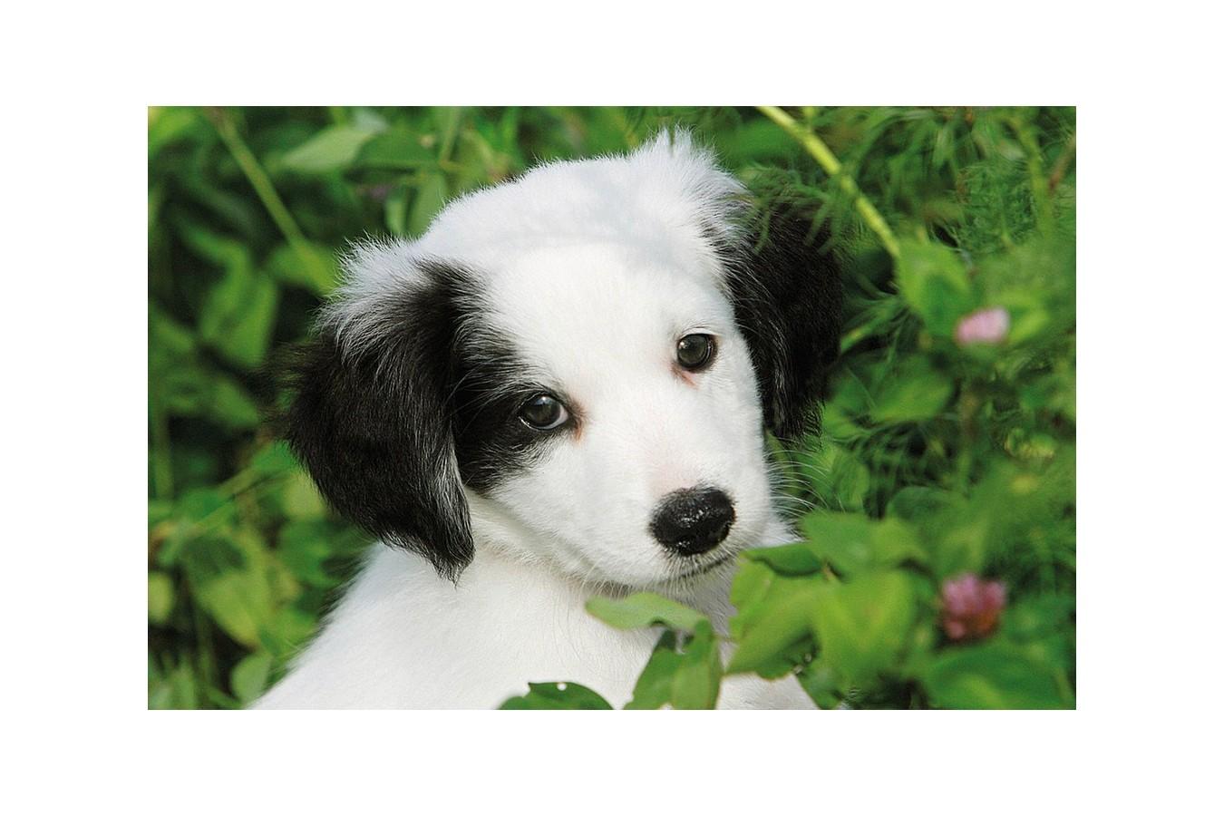 Puzzle mini Ravensburger - Animale, 54 piese (09430)