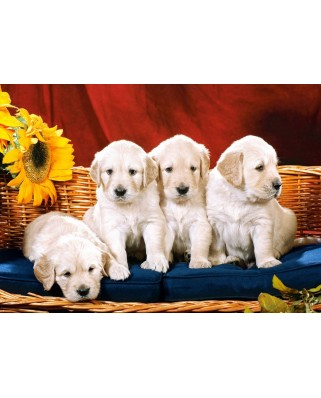 Puzzle Castorland - Puppies with Sunflower, 1000 piese (101771)