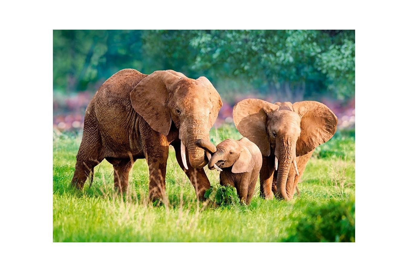 Puzzle Castorland - Elephant Family, 500 piese