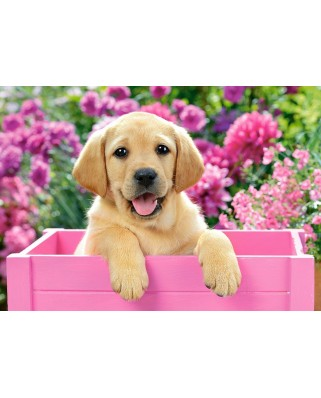 Puzzle Castorland - Labrador Puppy in Pink Box, 500 piese