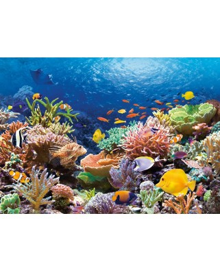 Puzzle Castorland - Coral Reef Fishes, 1000 piese