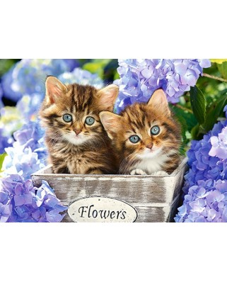 Puzzle Castorland - Cute Kittens, 60 Piese
