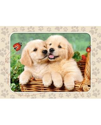 Puzzle Castorland - Golden Retrievers Pups, 60 Piese