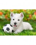 Puzzle Castorland - White Terrier And Football, 60 Piese