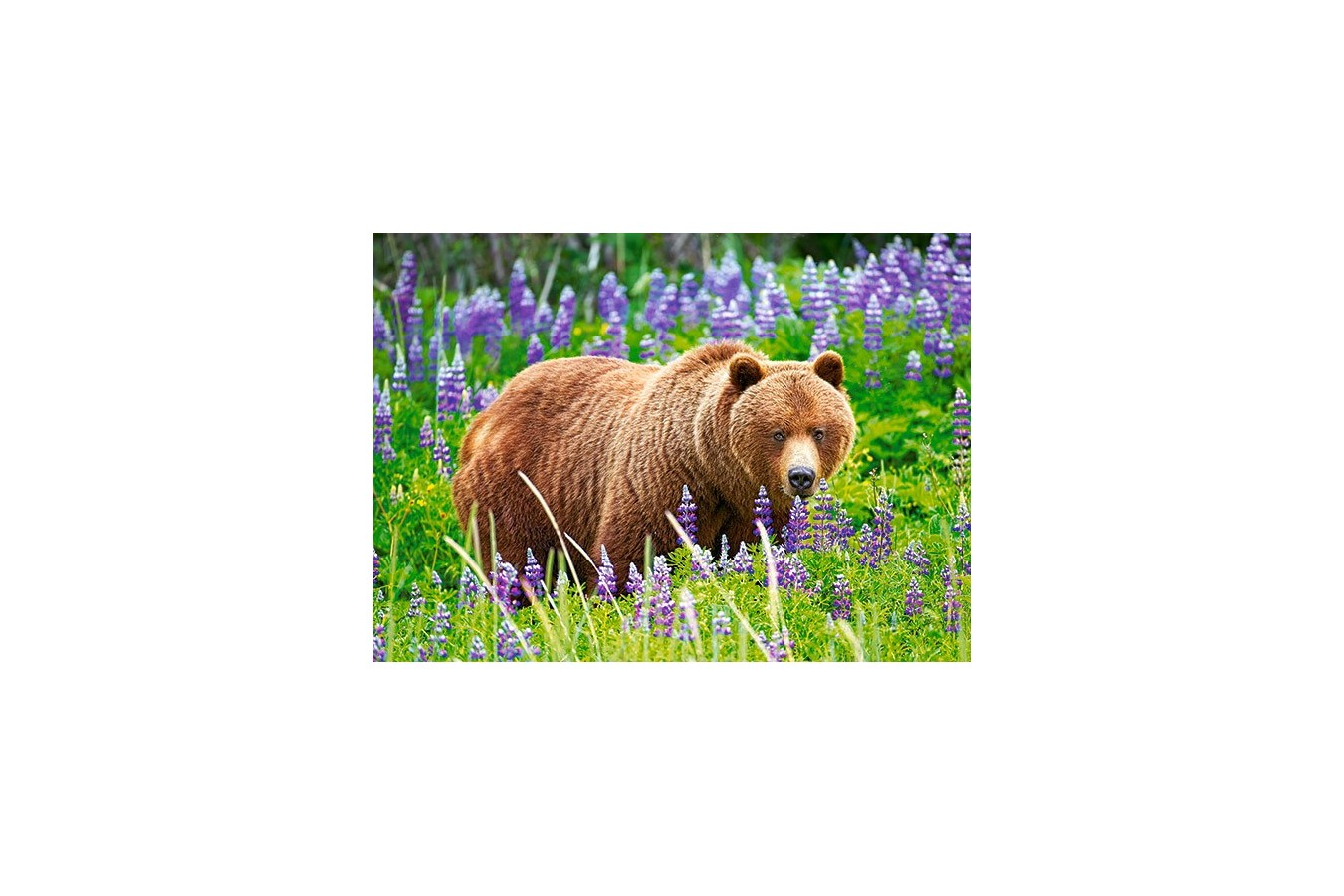Puzzle Castorland - Bear On The Meadow, 120 Piese