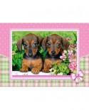 Puzzle Castorland - Dachshund Puppies, 120 Piese