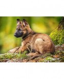 Puzzle Castorland - Puppy In The Forest, 120 Piese